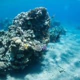 meno lombok острова Индонесии gili около мира черепахи моря подводного Стоковые Изображения RF