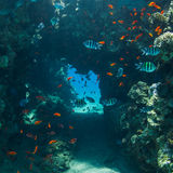 meno lombok острова Индонесии gili около мира черепахи моря подводного Стоковые Фото