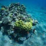 meno lombok острова Индонесии gili около мира черепахи моря подводного Стоковое Фото