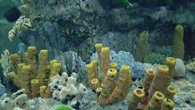meno lombok острова Индонесии gili около мира черепахи моря подводного Стоковое Изображение RF
