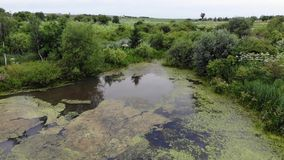 Menor verde claro del Lemna en el lago abandonado También sabido como la lenteja de agua común o poca lenteja de agua Cantidad aé metrajes