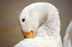 Menorca动物区系  库存照片