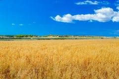 Menorca-Ackerlandlandschaft am sonnigen Tag, Spanien Stockfotos