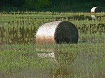 Menorca fields stock images