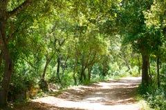 Menorca forest oak trees in Cala en Turqueta Ciudadela Stock Image