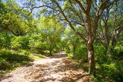 Menorca forest oak trees in Cala en Turqueta Ciudadela Royalty Free Stock Image