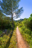 Menorca mediterranean track in es Mitjorn Gran Royalty Free Stock Photo