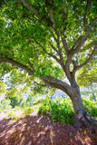 Menorca oak tree forest in northern cost near Cala Pilar Royalty Free Stock Photography