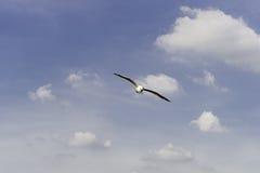 Menos andorinha-do-mar, uma pouco ao céu vasto. Imagens de Stock