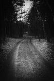 A menos da estrada viajada - madeiras Foto de Stock