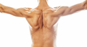 Mens back close up isolated on white background, many muscle dem