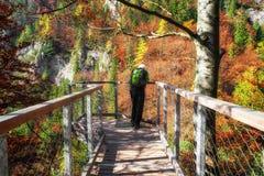 Mens bij vooruitzicht in de herfstbos stock foto's