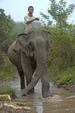 Mens bovenop een olifant in de Mekong rivier om het zoogdier te wassen Royalty-vrije Stock Afbeelding