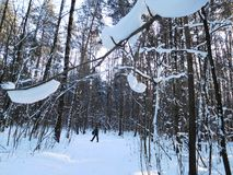 Mens in de winterbos Stock Foto's