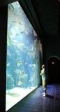 Mens dichtbij aquarium met vissen in Oceanografisch Museum Monaco Royalty-vrije Stock Fotografie