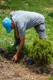 Mens die aan Tuin werken Stock Foto's