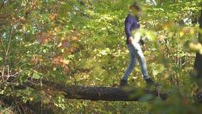 Mens die bomen in park beklimmen Knappe mens op de aardachtergrond van de de herfstdaling Klimmermens op boom De herfstmens met h stock videobeelden