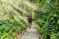 Mens die in bos met zonnestraal lopen stock afbeelding