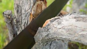 Mens die de boomtak met handzaag snijden stock video