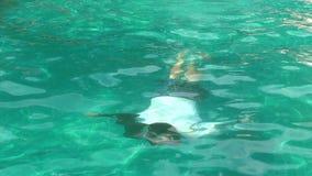 Mens die in de pool zwemmen stock footage