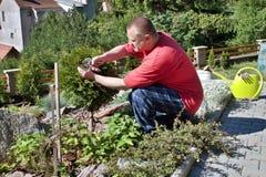 Mens die in de tuin, de zomerdag werken Stock Fotografie