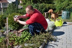 Mens die in de tuin, de zomerdag werken Royalty-vrije Stock Foto's