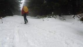 Mens die in de winterbos lopen met Noordse Wandelstokken stock videobeelden