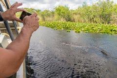 Mens die dichte alligator van airboat in het nationale park van Everglades, Florida, de Verenigde Staten van Amerika fotograferen royalty-vrije stock afbeelding
