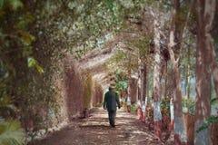 Mens die die door weg lopen door bomen wordt behandeld stock foto