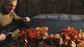 Mens die een autoraam van kleurrijke de herfstbladeren schoonmaken stock video