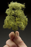 Mens die een boom houden royalty-vrije stock foto