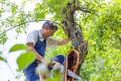 Mens die een boom snijden Stock Foto