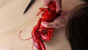 Mens die een gekookte zeekreeft op handen houden royalty-vrije stock foto's