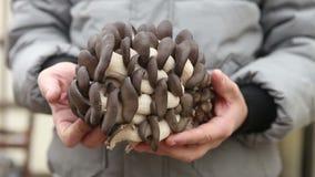Mens die een grote oesterpaddestoelen houden stock video