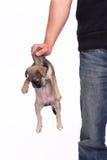 Mens die een hond dragen Stock Afbeeldingen