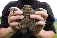 Mens die een kikker in zijn handen houden Stock Foto