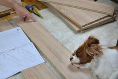 Mens die een Lade met een Hulp van Zijn Hond assembleren Royalty-vrije Stock Foto's