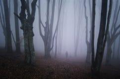 Mens die in eng bos met mist lopen Stock Afbeeldingen