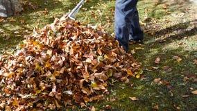 Mens die gevallen de herfstbladeren in de werf verzamelen stock footage