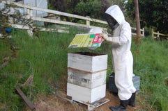 Mens die met bijenkorf werkt royalty-vrije stock afbeeldingen