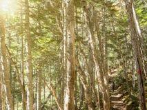 Mens die op de berg door het hoogtepunt met hoge bomenwildernis lopen Stock Fotografie