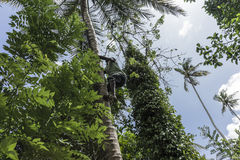 Mens die op een Palm gaan royalty-vrije stock foto's
