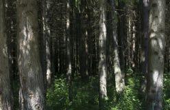Mens die op een weg in een vreemd donker bos met mist lopen royalty-vrije stock afbeeldingen