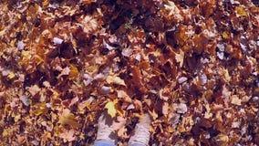 Mens die die op grond gevallen gele en vernietigde bladeren op zonnige de herfstdag lopen stock videobeelden