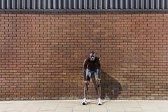 Mens die tegen Bakstenen muur rusten Stock Foto's
