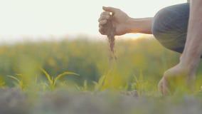 Mens die verse grond in handen houden stock video