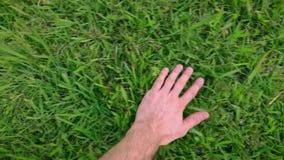 Mens die wat betreft groen gras zacht van rechts naar links groeien stock videobeelden