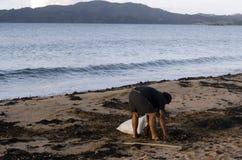 Mens die zeewier verzamelen stock afbeelding