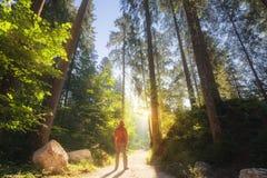 Mens die zich bij het zonnige bos bevinden Stock Afbeeldingen