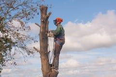 Mens die zich op boom bevinden royalty-vrije stock fotografie